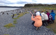HD Walk with penguins!